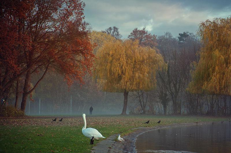 Herbst Ziegelwiese Halle Saale